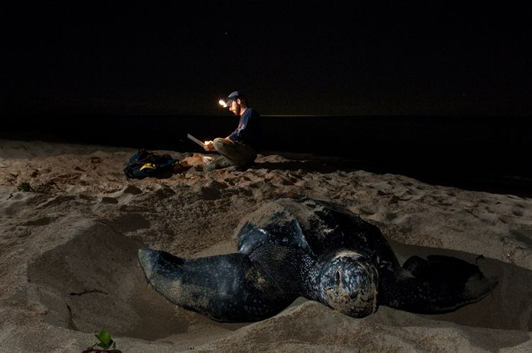 Sandy Point Wildlife Refuge, St Croix - Photo by Steve Simonsen